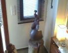 maternidadmayte13